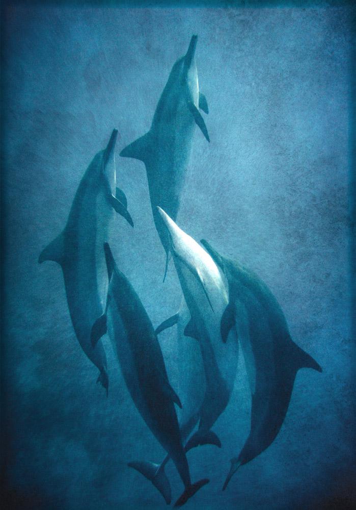 dolphin-dance-6622adj5x7