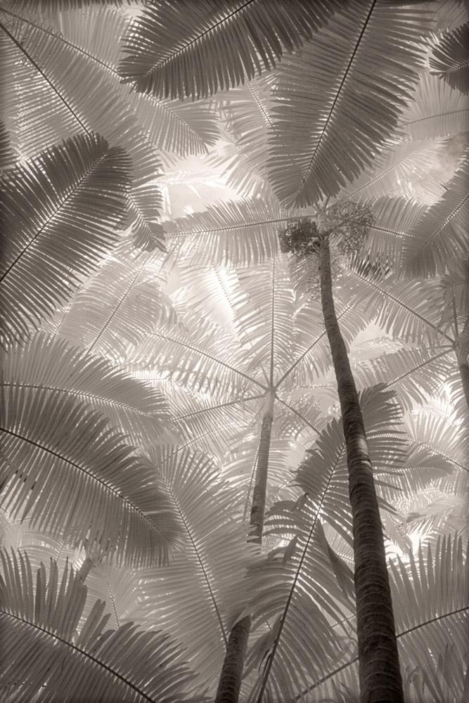 palm-forest_0268adj