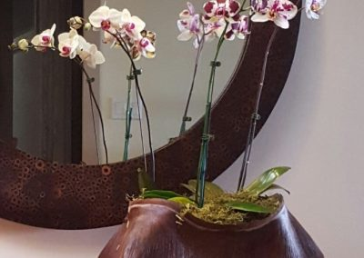 Shelley Hoist Zen Orchid Basket